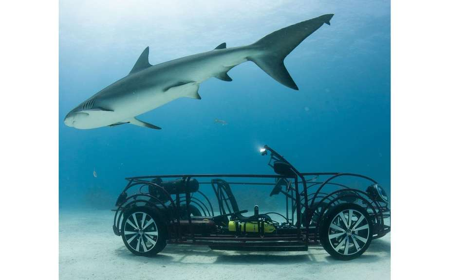 Volkswagen Beetle Convertible to protect sharks