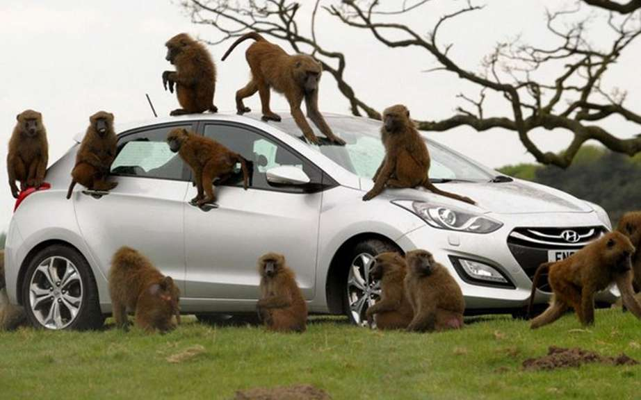Hyundai i30 UK livery has baboons